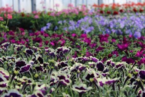 blumen kronm ller saisonelle pflanzen aus eigener produktion. Black Bedroom Furniture Sets. Home Design Ideas